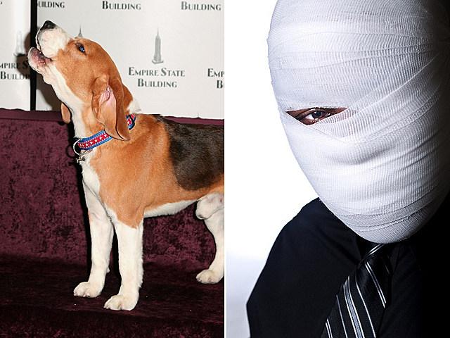 barkingroommate