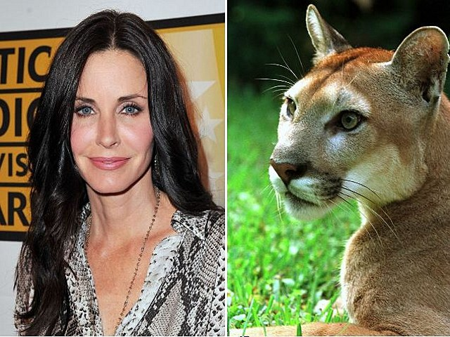 Courtney Cox Cougar