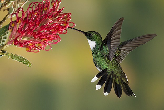 5 Secretly Badass Animals Hummingbird