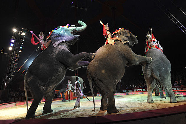 Circus elephants saved by vodka